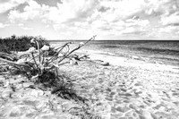 20180219-JAH07710: Conch apocalypse at Leeward beach, Turks & Caicos Islands.