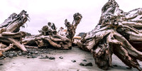 20160624-DSC1660: Massive driftwood at Rialto Beach, Olympic National Park, Washington. (2x1 size)